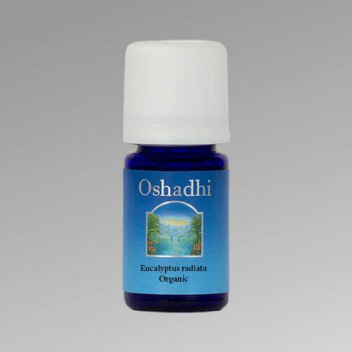 oshadhi-eucalyptus-radiata-illoolaj Vírusölő, bakteriumölő, immunerősítő, energizaló.