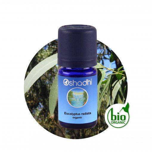 oshadhi eukaliptusz radiata illóolaj aromaterápia Vírusölő, bakteriumölő, immunerősítő, energizaló.